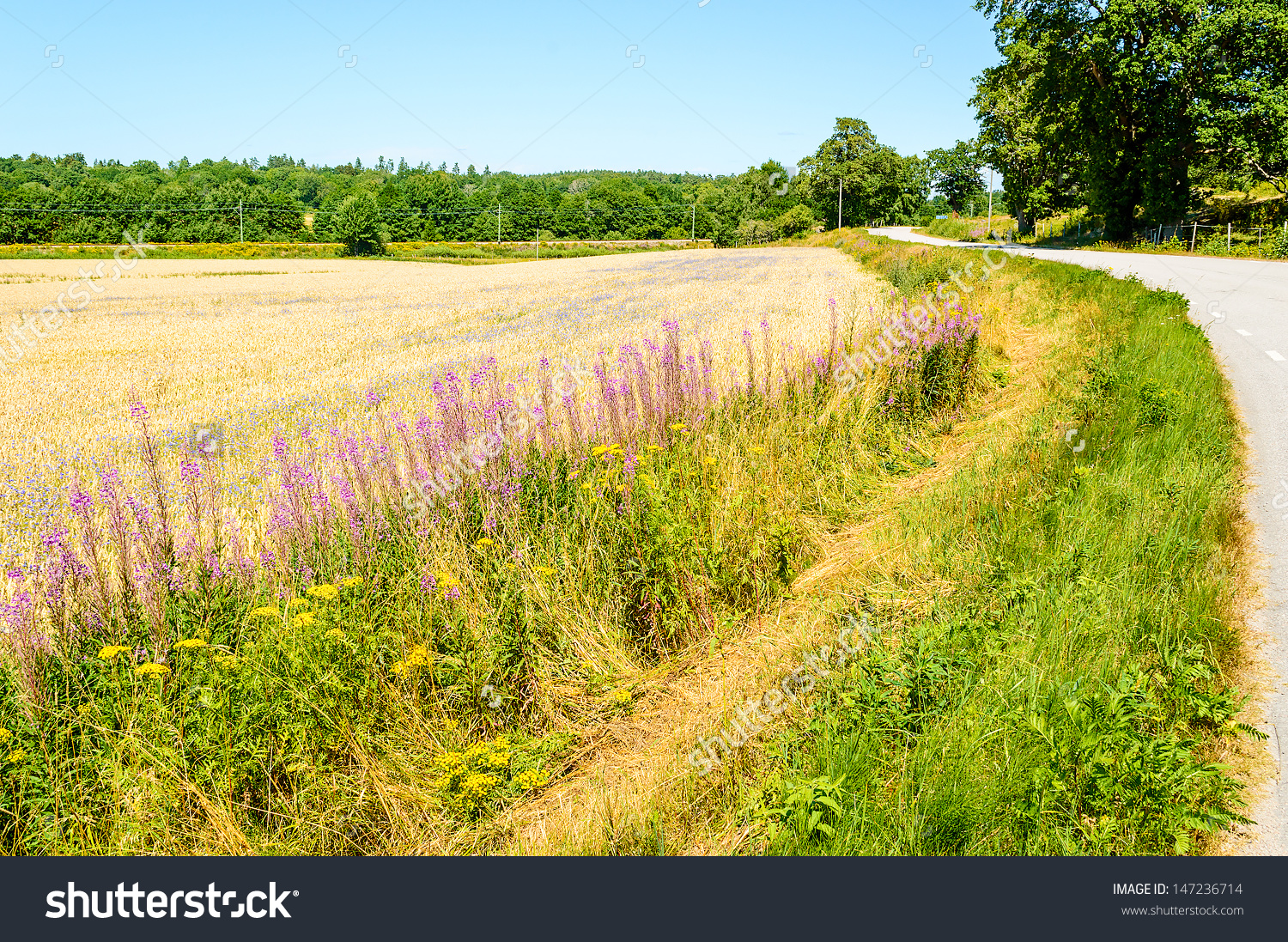 Roadside Maintenance By Cutting Grass And Weeds Along Side Road.