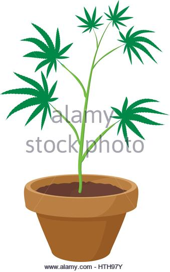 Grass Drug Weed Growing Stock Photos & Grass Drug Weed Growing.