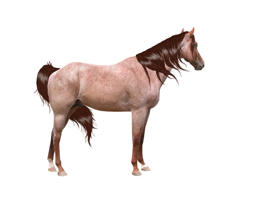 Red Roan Precut w mane and tail by looserfaceman on DeviantArt.
