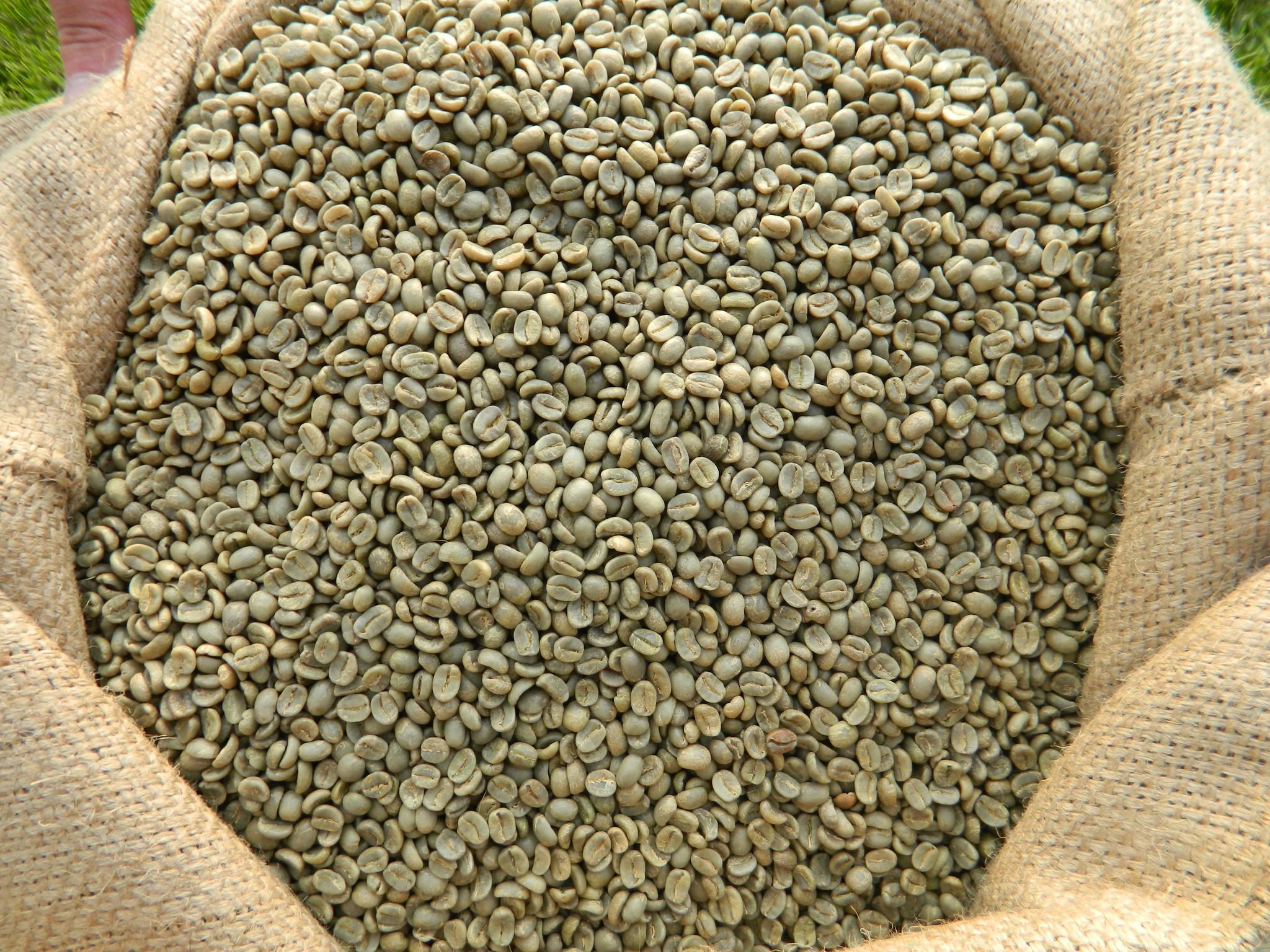 Costa Rica Tarrazu La Pastora Coopetarrazu RFA Arabica Coffee.