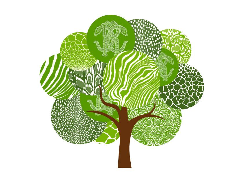 Roberto Cavalli to Support Green Revolution With Treedom.