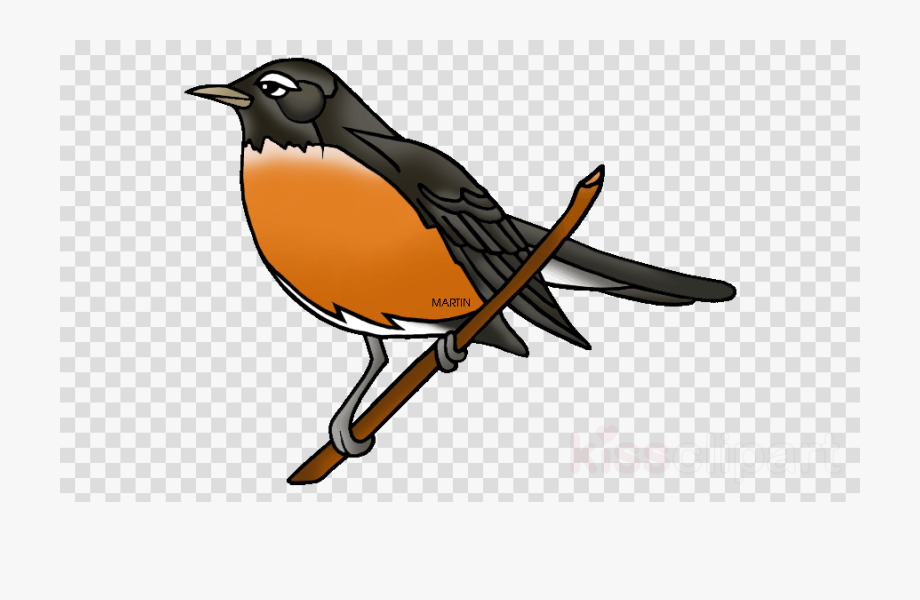 Bird Robin Transparent Background Clipart European.