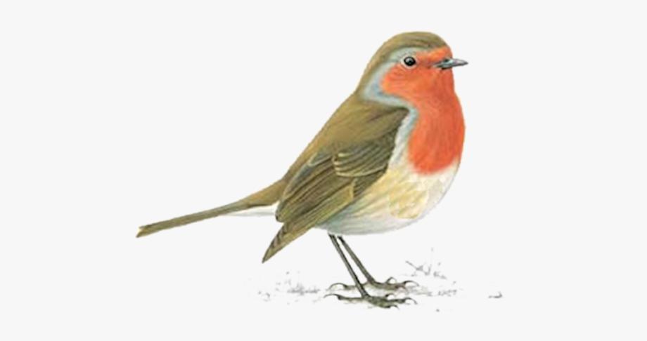 Robin Bird Clipart , Transparent Cartoon, Free Cliparts.