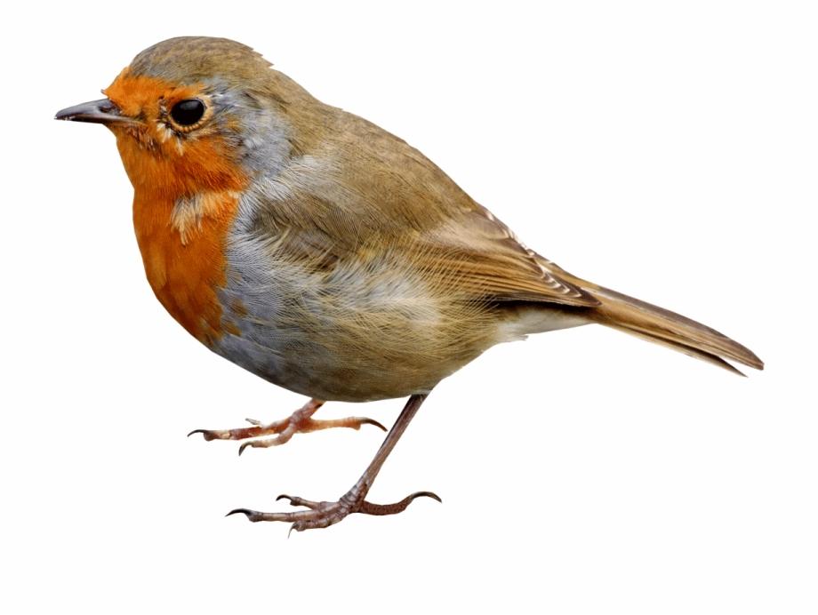 Single Bird Png Transparent Image.