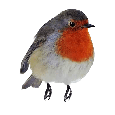 Robin Redbreast perching transparent background.