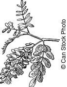 Robinia Clip Art Vector Graphics. 10 Robinia EPS clipart vector.