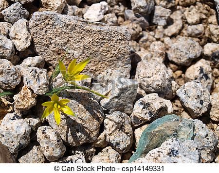 Stock Photos of Yellow flowers in a rock crevice.