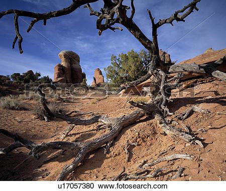 Stock Photography of Dead Tree in Red Rock Desert u17057380.