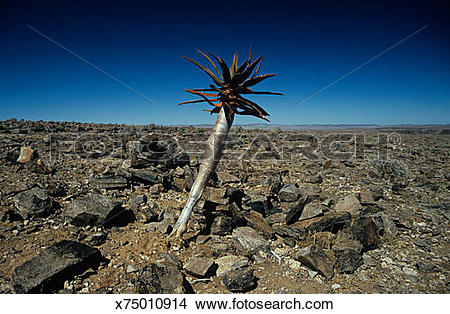 Stock Photo of Tree in a rock desert x75010914.