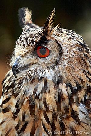 Rock Eagle Owl Royalty Free Stock Image.