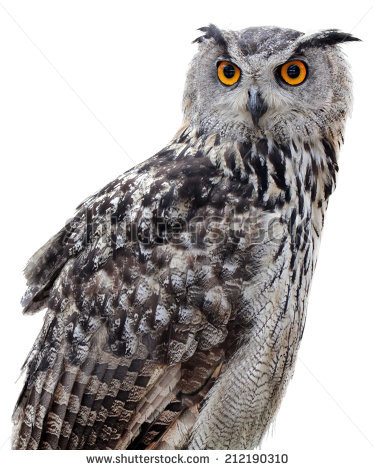 Indian Eagle Owl Stock Images, Royalty.