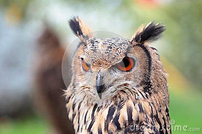 Portrait Of An Indian Rock Eagle.