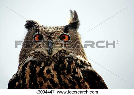 Picture of Rock Eagle.