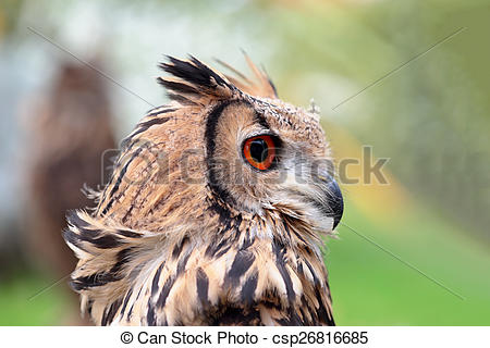 Pictures of Portrait of an indian rock eagle.
