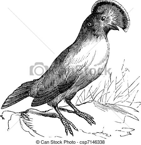 Vector of Guianan Cock.