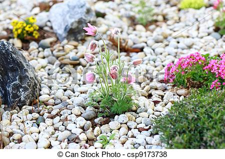 Pictures of Rockery.