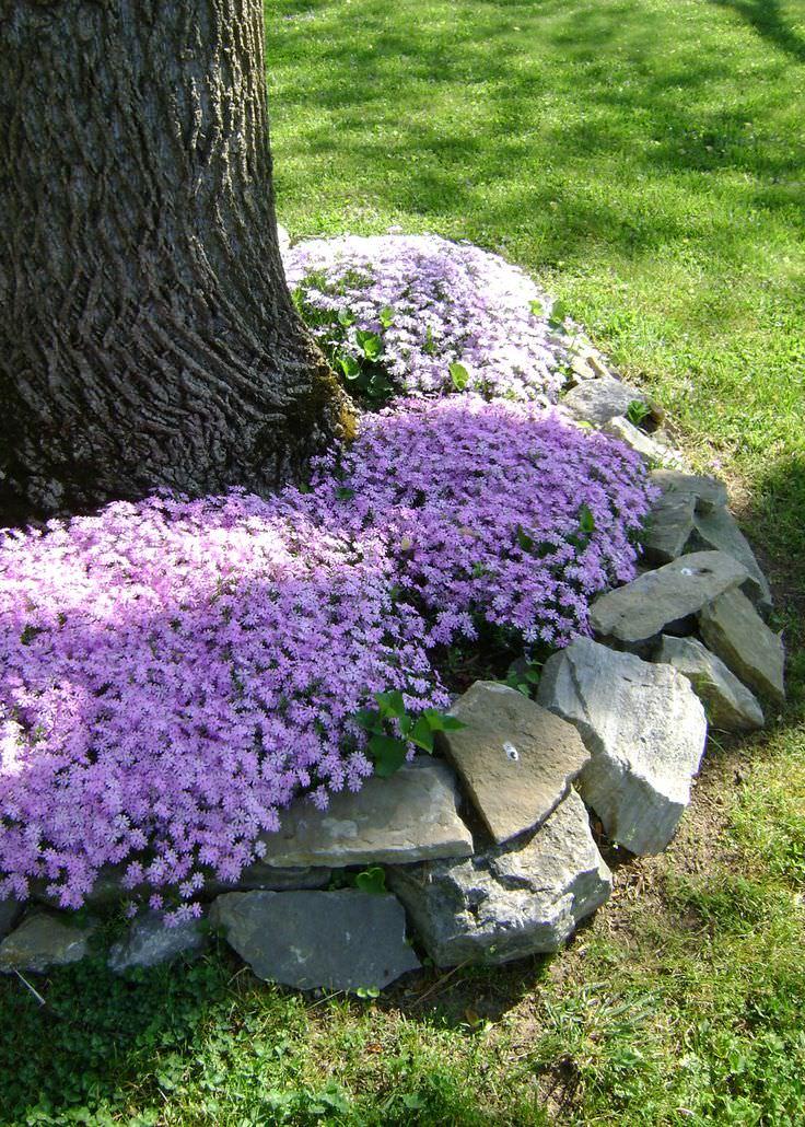 30+ Rock Garden Designs.