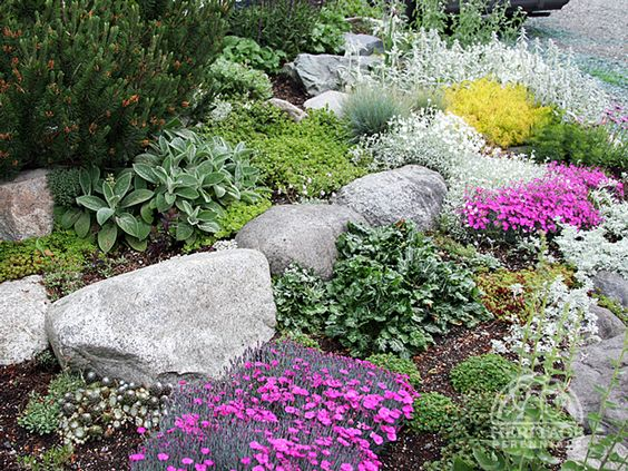 Pictures of Rock Bed Gardens.