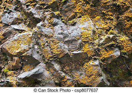 Picture of Lichen & Moss Rock Wall.