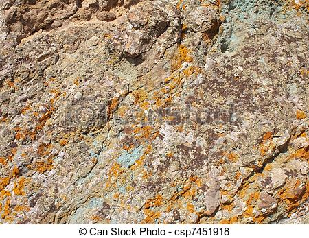 Pictures of Lichens on rock, texture.