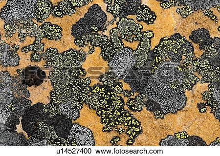 Stock Photography of Rock lichen colonies on boulders brought down.