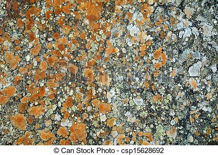 Stock Photographs of Lichens on a rock.