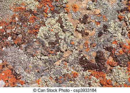 Stock Photo of Rock Lichens Background Pattern.