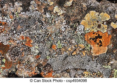 Pictures of Lichen in Iceland.