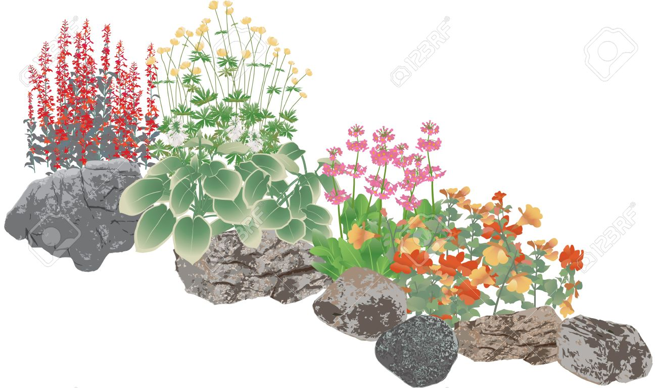 Rockery Plants, Rock Pool Edging Plants Royalty Free Cliparts.