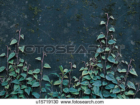 Stock Photography of rock, stone, wall, outdoor, plant, vine.