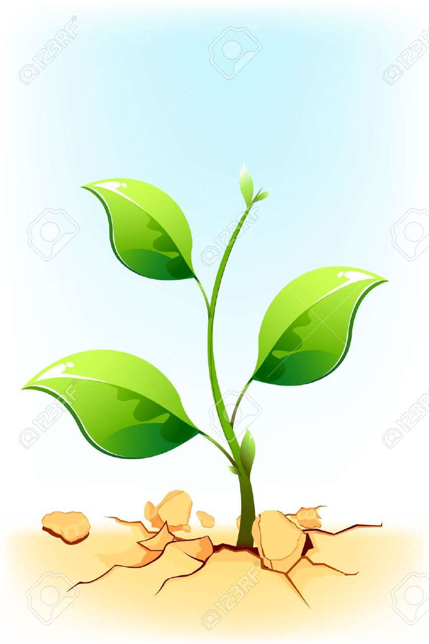 Illustration Of Plant Sapling Growing On Rock Soil In Draught.