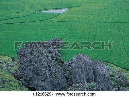 Picture of farm, field, rock, countryside, plant, paddy rice.