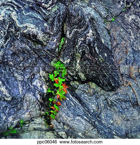 Stock Images of rock, spring, plant, crack, gab, crack ppc06046.