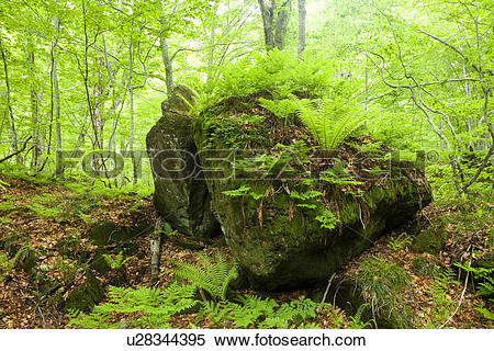 Stock Image of Rock Plant Moss Tree Nature u28344395.
