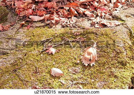 Stock Image of plant, mountain, fallenleaves, moss, rock, plants.