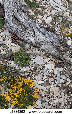 Stock Photography of Detail of tree root amongst pebbles and wild.