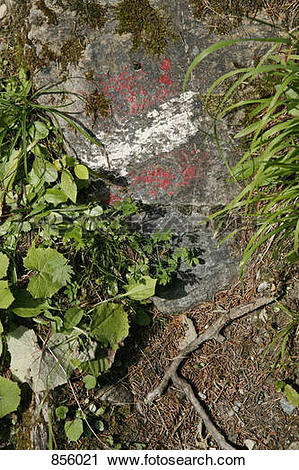 Stock Photography of Detail of a plants growing around a rock with.