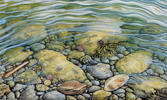 Rockpool Treasure' Large Card Blank inside. by AndrewsWatercolours.