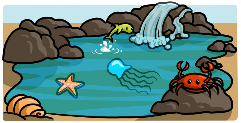 Image result for rock pool clipart