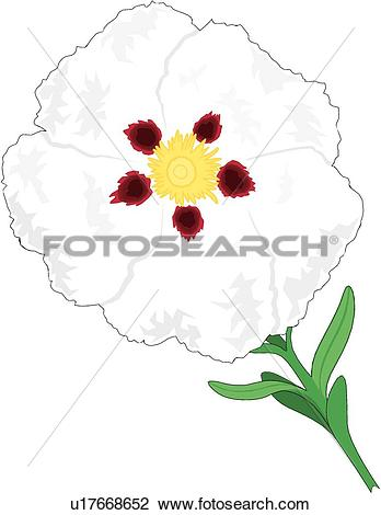 Clipart of Rock Rose u17668652.