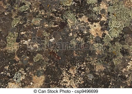 Stock Photographs of Lichens and moss on rock surface.