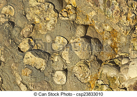 Stock Photography of Knobby Rock Surface Texture csp23833010.