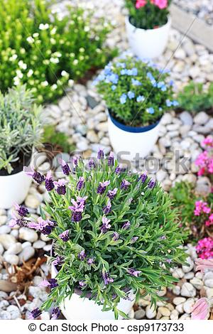 Stock Photos of Rockery.