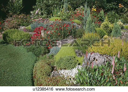 Stock Images of Persicaria and heather in rockery garden with.