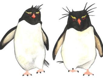 Rockhopper penguin.