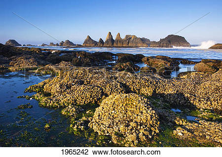 Stock Photo of tide pools along the beach at seal rock state.