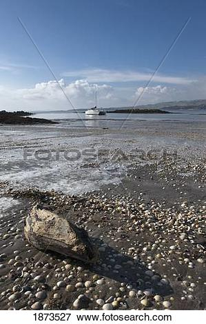 Picture of dumfries, scotland; rocks and driftwood on the shore.