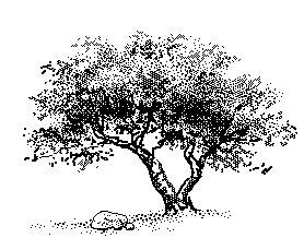Free clipart tree rocks.