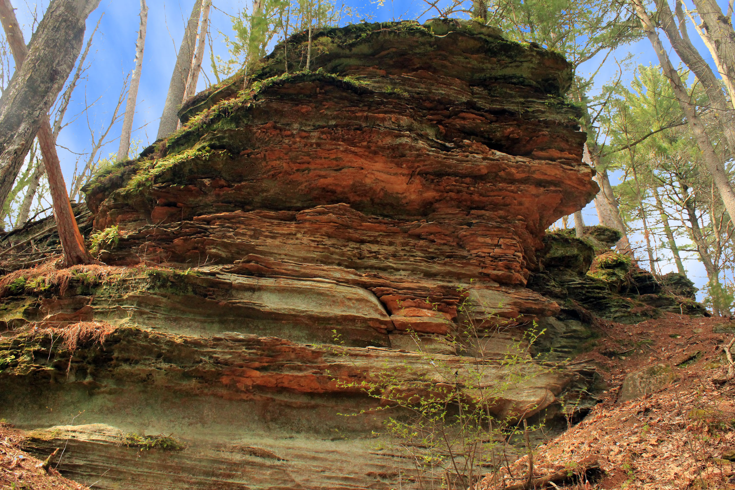 Rock outcropping at Rocky Arbor State Park, Wisconsin.
