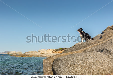 Border Collie In The Sea Stock Photos, Royalty.